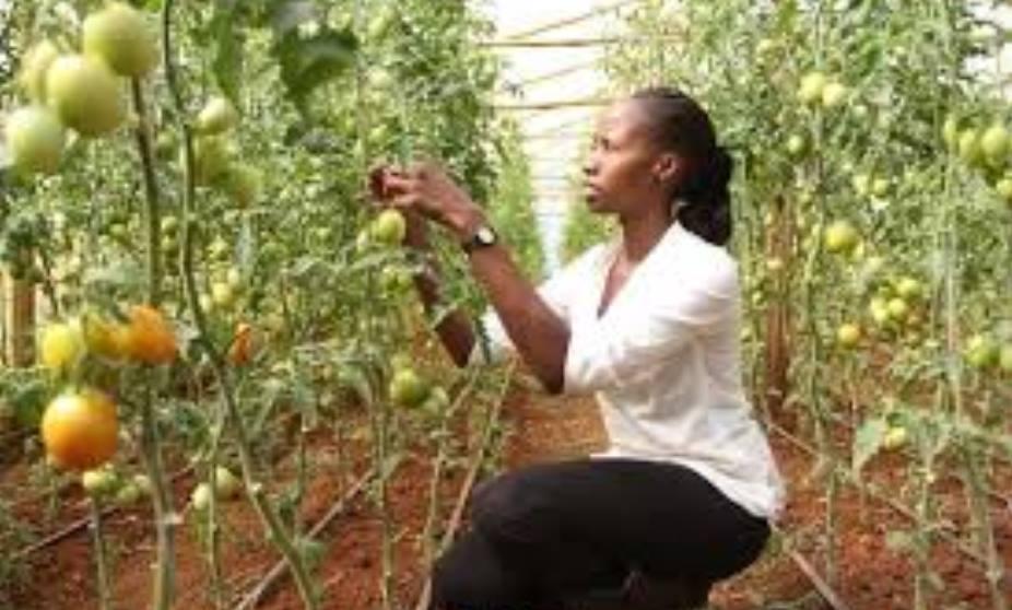 What Is Fruit Farming Passnownow